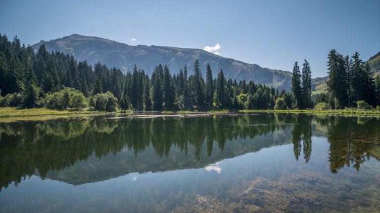 Vue sur le lac des mines d'or en été