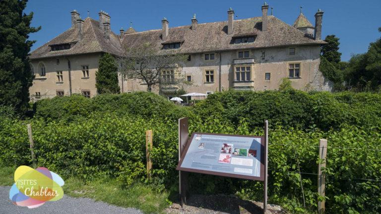 Chateau de ripaille et ses vignes