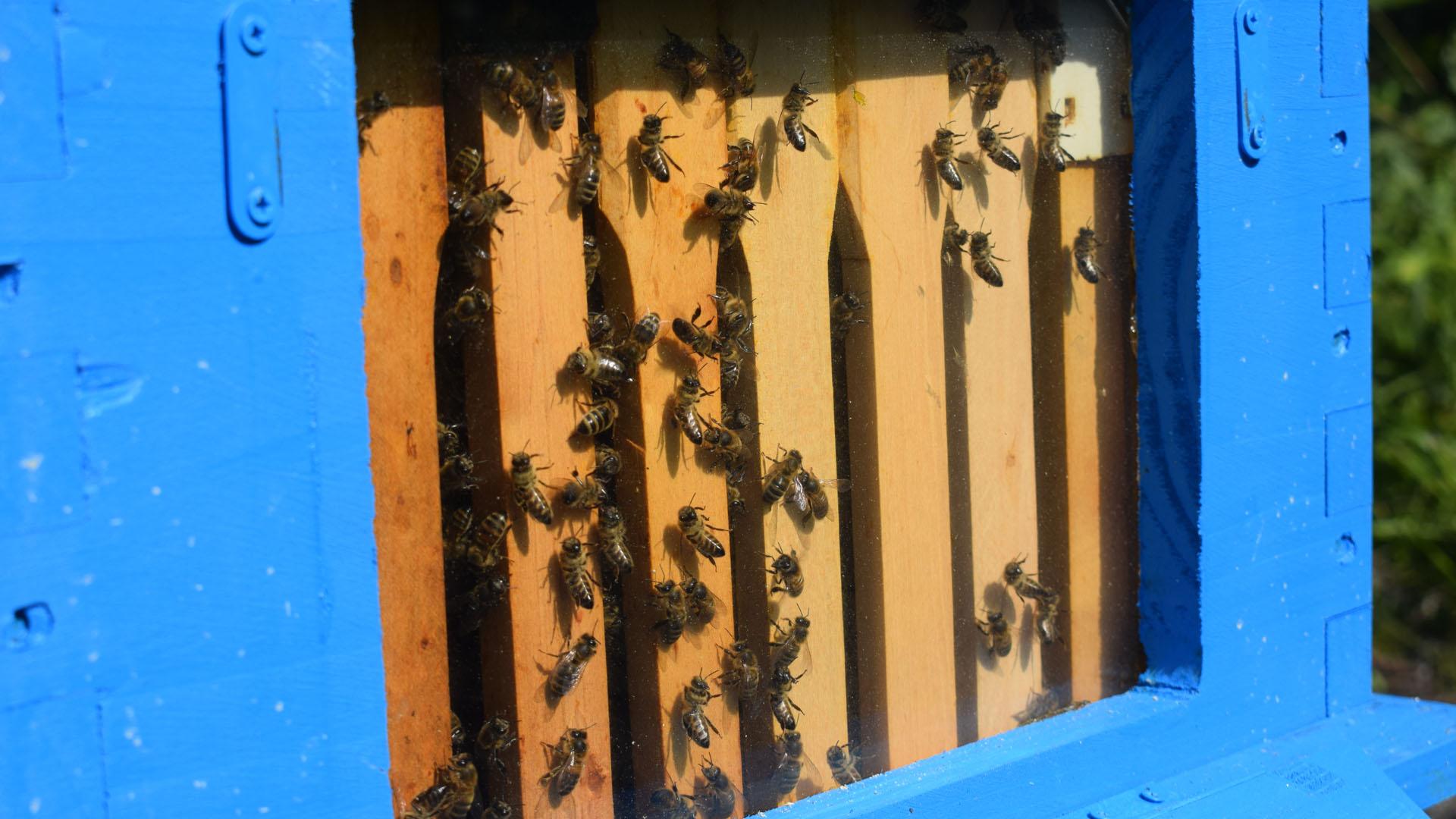 Fenêtre d'observation sur la ruche pédagogique du géosite de la forêt ivre - Commune de Vailly.