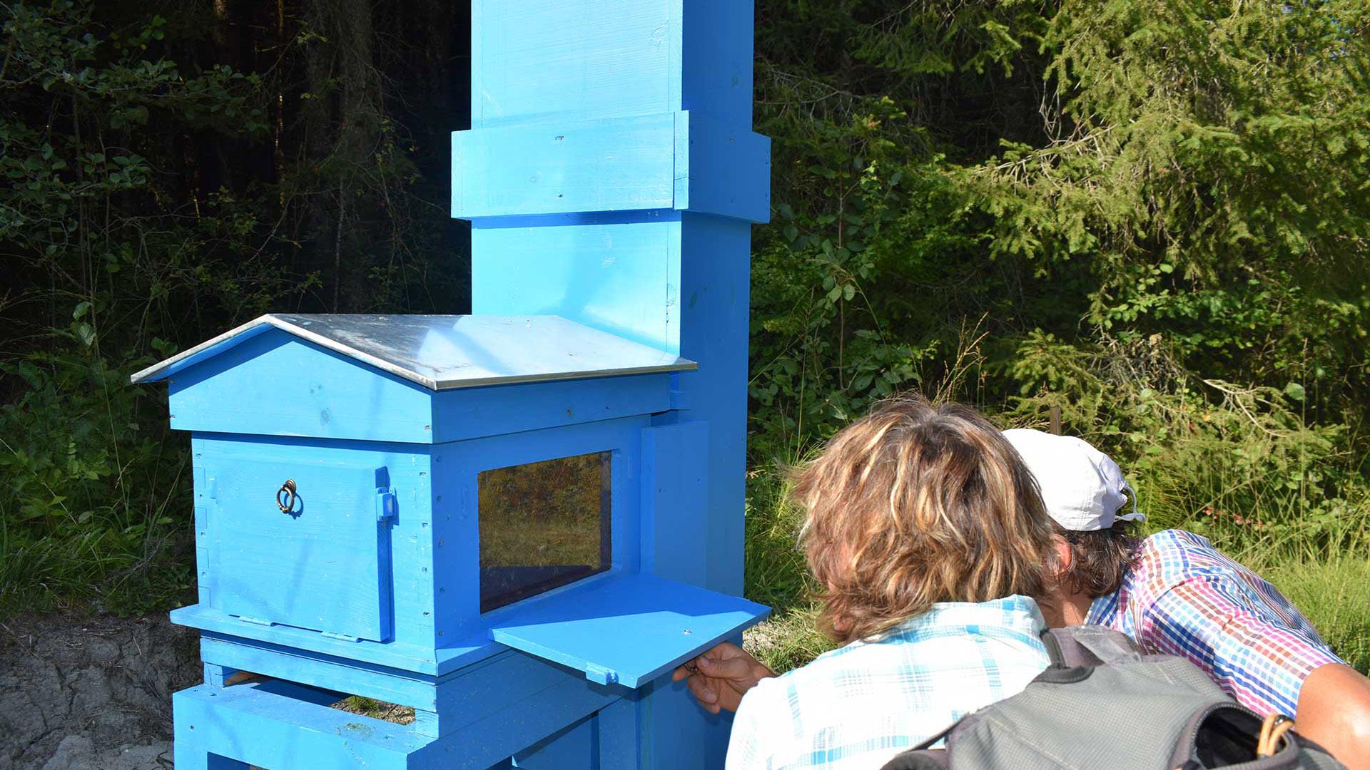 2 personnes regardent l'intérieur de la ruche pédagogique du géoparc chablais